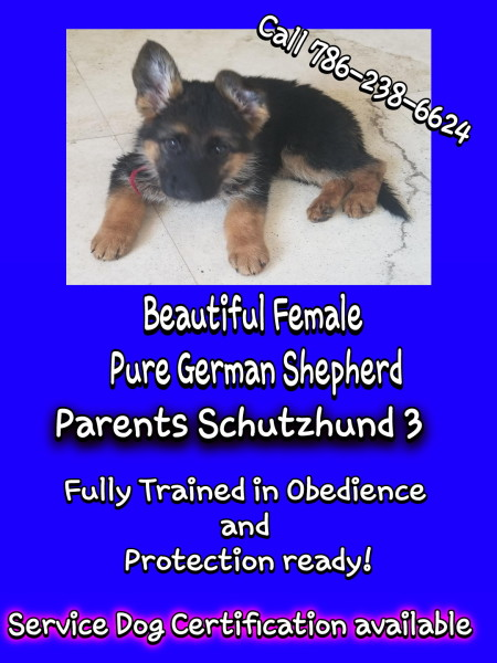 Trained Companion Dogs For Sale HOME